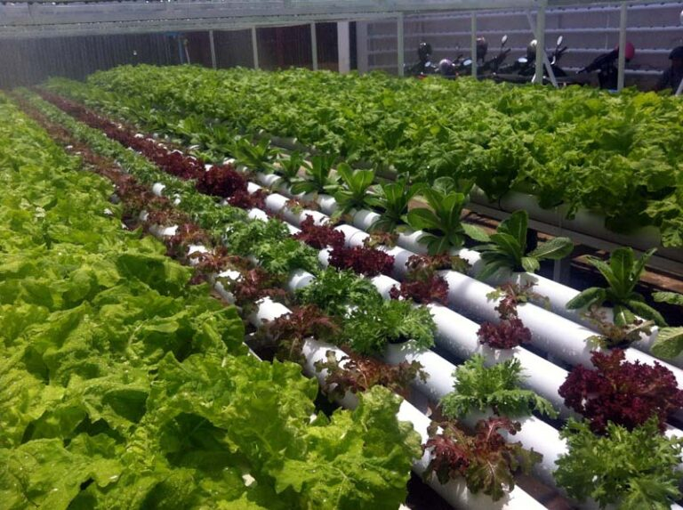 hydroponics training1.jpg
